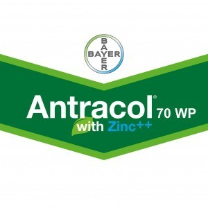 Antracol 20g